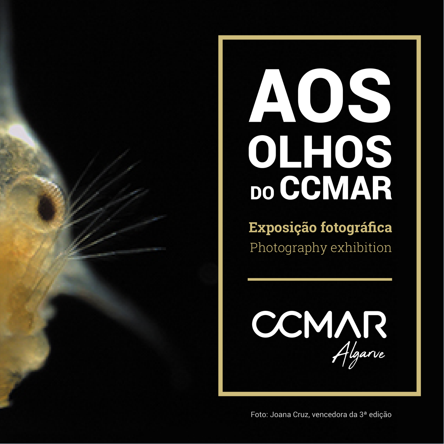Aos Olhos do CCMAR - Exposição temporária