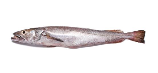 Pescada-branca